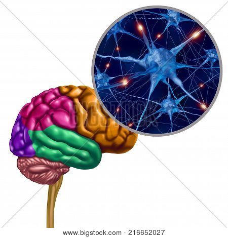 Brain lobe active neurons as a human thinking ogan with neuron magnification with 3D illustration elements.