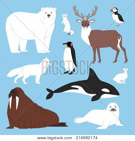 Arctic animals cartoon vector polar bear beluga penguin character collection with whale reindeer and seal in snowy winter antarctica set isolated illustration.