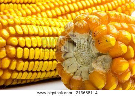 Less corn in the middle.Less corn in the middle.