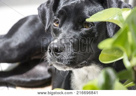 black rescued dog observing the things around