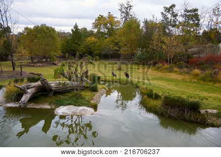 Large body of water with animals on surrounding land.