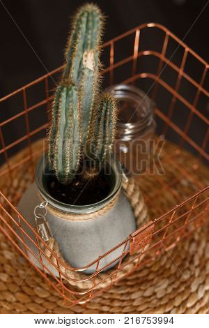 Cactus plant in iron handmade pot on copper basket. Close top view.