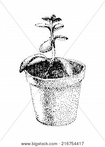Hand drawn crassula vector image. House plant in a pot. Black illustration on white background. Pointillism technic.