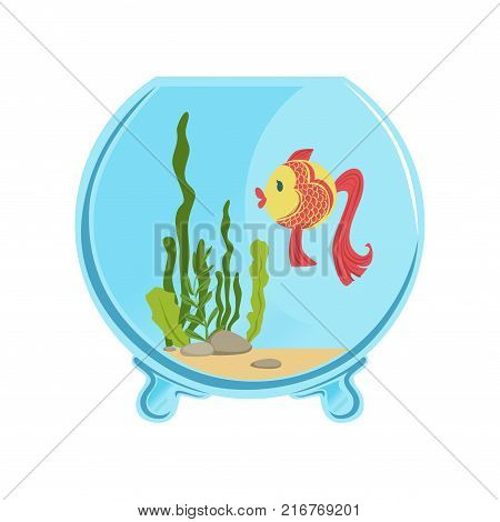 Round glass aquarium with golden fish. Different green algae and little stones on sand. Aquatic concept. Colorful illustration isolated on white. Cartoon flat vector icon design for card or flyer.
