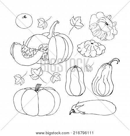 Single Sketch Pumpkin Image & Photo (Free Trial) | Bigstock