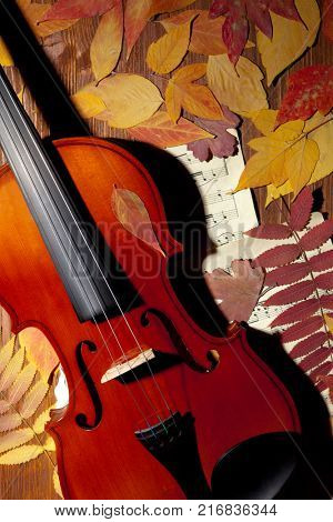 Violin in vintage style on wood, notes, autumn leaves background