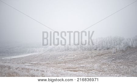 Winter Landscape with Field and Trees Covered with Frost and Snow in the Mist