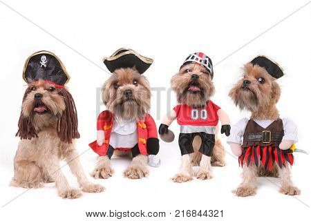 Multiple Dogs in Pirate and Football Costumes