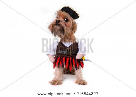 Mutt Dog in Pirate Inspired Clothing Costume