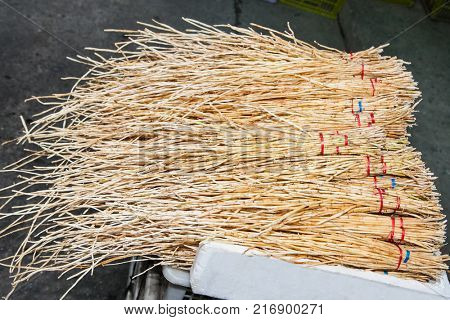 Horsetail (Equisetum) healing plant bunch background. Equisetum arvense or Snake grass is a medicinal plant. Philippines.