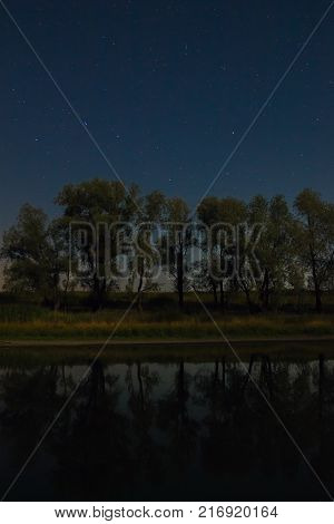 The constellation is a Ursa Major in the night sky above the trees growing near the lake