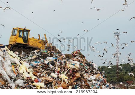 A bulldozer tractor pushes garbage from a mountain in a city dump on the background of a large number of gulls during the day in clear weather, heat, summer