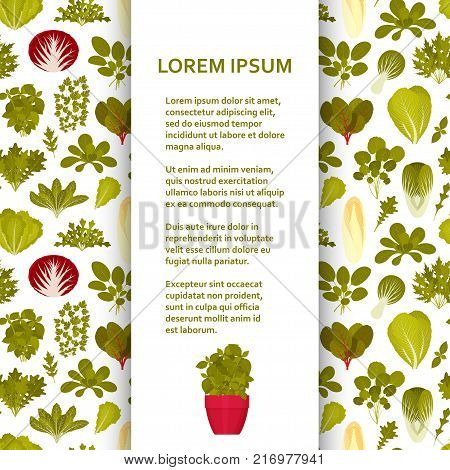 Flat poster or banner template with green salads and vegetables. Vector illustration.