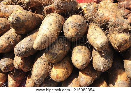 Group of  raw Taro (Yautia Lila), close-up fresh taro in market