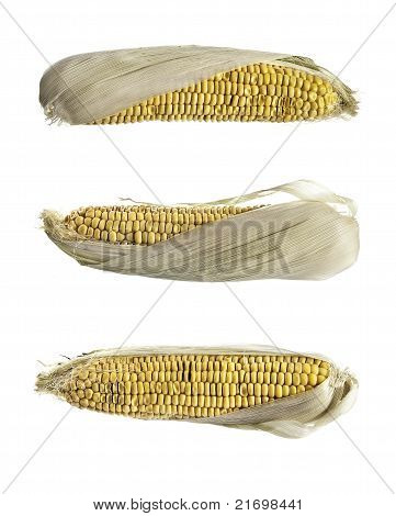 Three Cobs Of Corn
