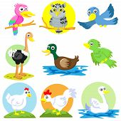 the bird and poultry cartoon vector set poster