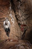 A tall bird at Barcelona Zoo standing on a rock poster