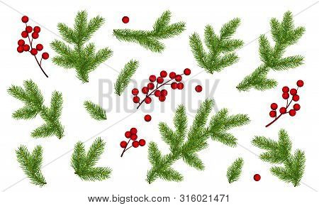 Branches Of Christmas Tree And Bunch Of Holly Berries. Set Of Christmas And New Year Clip Art. Reali