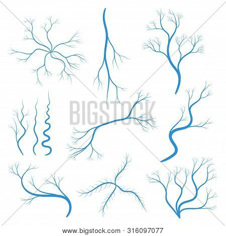 Set Of Human Veins Or Vessel, Blue Capillaries, Arteries, Eye Vein. Blood System Icon. Concept Anato