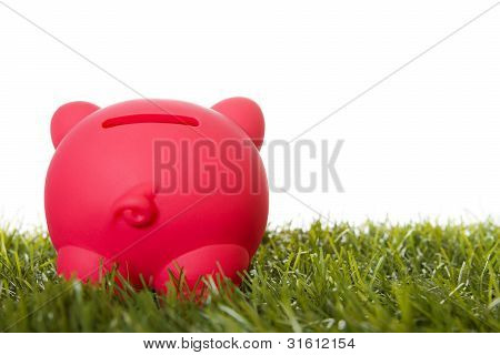 Piggy Bank On Grass