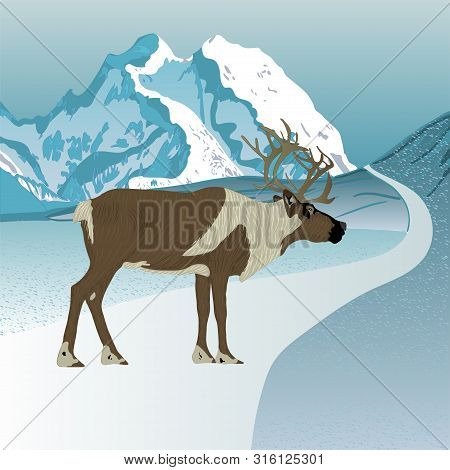 Wild Reindeer. Caribou. Animals Of Alaska.  Vector.