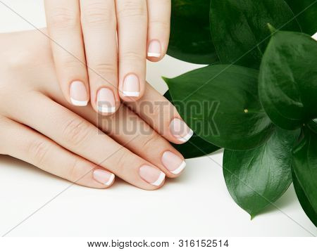 Skincare. Beautiful Delicate Hands With Manicure And Green Leaves, Closeup Isolated On White. Photo