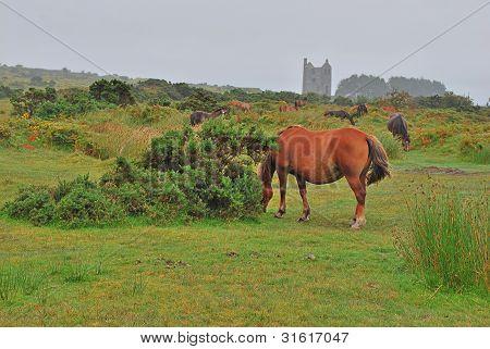Horses On Bodmin Moor