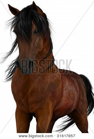 Bay Horse White Background
