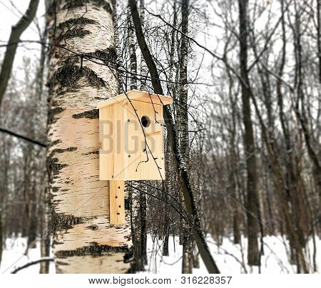 New Birdhouse On Birch In The Forest