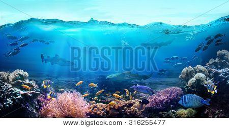 Tropical coastal waters. Underwater view of the coral reef. Life in the ocean.