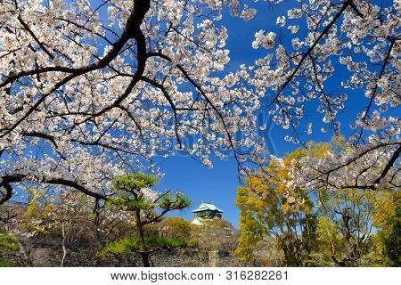The Osaka castle surrounded by cheery trees flowers, Japan