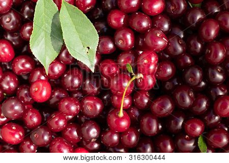 Background From Ripe Red Cherries  With Leaves