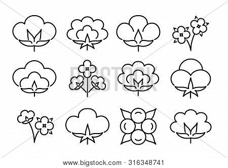 Cotton Flower & Ball. Line Icon Set. Symbol & Logo For Natural Eco Organic Textile, Fabric. Isolated