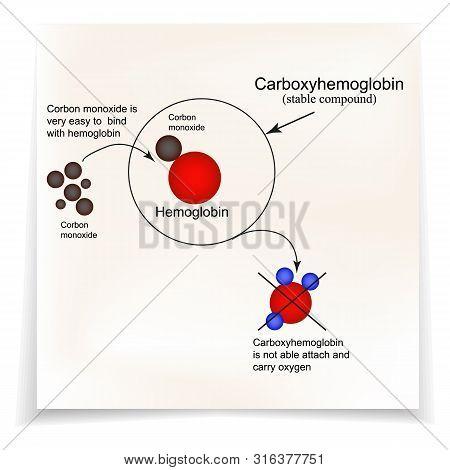 Carboxyhemoglobin. Joining The Hemoglobin Carbon Monoxide. The Inability To Transport Oxygen. Carbon