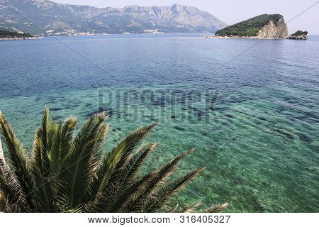 Leaves Cycad On A Background Of Transparent Water Of The Adriatic Sea In Medieval City Budva, Monten