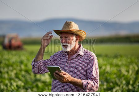 Senior Farmer With Hat Standing In Soybean Field And Holding Tablet. Tractor Spraying Crops In Backg