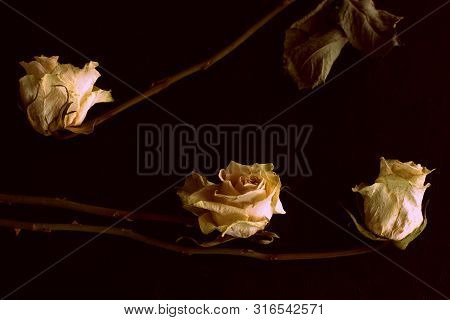 Wilted white roses on a dark background close up in retro style poster