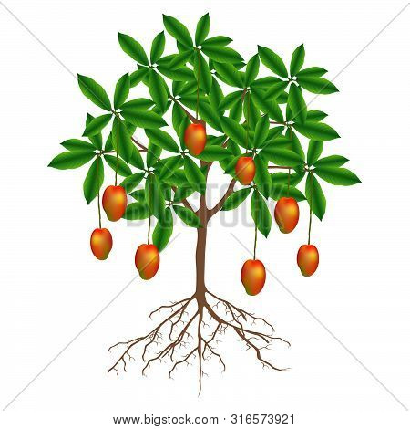 A Mango Tree With Fruits On A White Background.