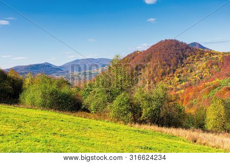 Beautiful Countryside In Fall Colors. Green Grass And Trees On The Hill. Forest In Red And Yellow Fo