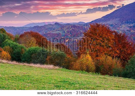 Gorgeous Purple Dusk Scenery Of Countryside. Trees In Fall Colors. Dominant Red Color Of Foliage. Cl