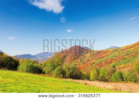 Beautiful Mountain Landscape In Autumn. Forest On The Grassy Hills. Wonderful Sunny Weather At High