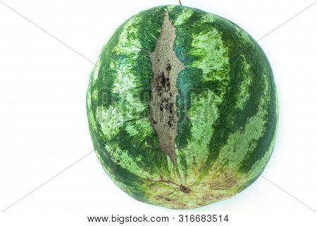 Ugly Shaped Watermelon With Scar-like Structure, Scratch. Organic Deformed Vegetables And Fruits Iso
