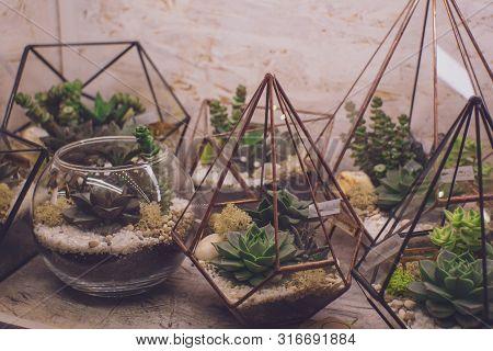 Succulent Garden In Glass Terrarium Cactus Flowers In A Glass