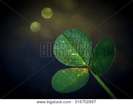 Clover Leaf In Gold Glitter Sparckles
