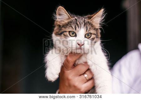Hands Holding Cute Tabby Kitten With Sweet Looking Eyes . Adorable Homeless Kitty With Funny Emotion