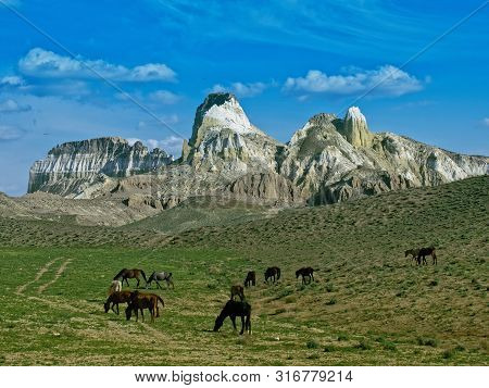 Herd Of Horses Grazing In The Mountains. Horses In The Mountains Airakty. Kazakhstan 2019. Expeditio