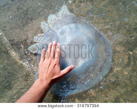 Jellyfish Rhizostoma Root Rope, Thrown To The Shore Of The Sea. Dead Jellyfish. Jellyfish In The Han