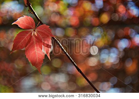 Colorful Leafs In Autumn Season, Autumnal Background, Welcome Autumn-concept