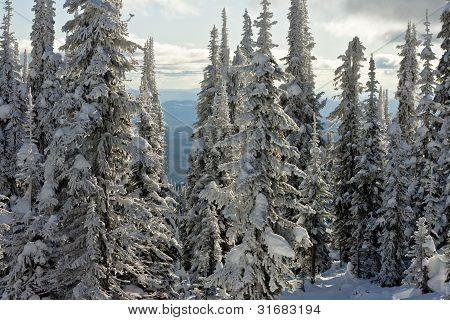Ski Resort Landscape