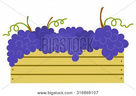 Wooden Container With Ripe Purple Grapes Isolated Icon. Vector Vineyard Fruits, Seedless Bubo, Vitic